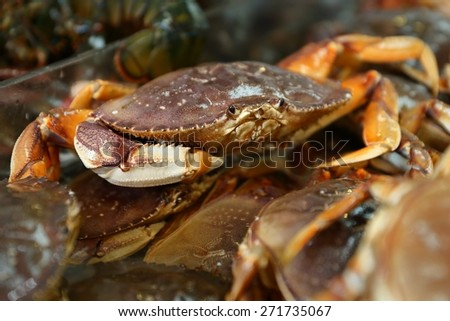Seafood Market Live Dungeness Crabs. Live Dungeness crabs for sale at a Seattle market.  - stock photo