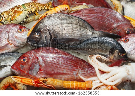 Seafood variety/Fresh seafood on ice. Octopus, crayfish, shrimp, clams, date mussel, and European lobster. - stock photo