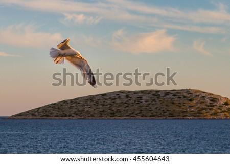 Seagull above the sea, National Park Kornati in Croatia at Adriatic sea, Mediterranean, Europe - stock photo