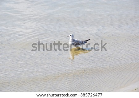 Seagull alone on the beach - stock photo