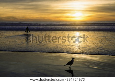 seagull and surfer at sunset at Pacific Beach - stock photo