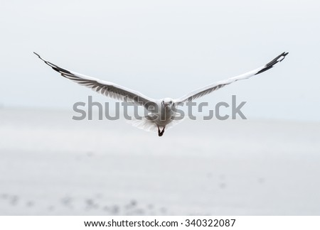 Seagull bird flying in the blue sky, Freedom concept - stock photo