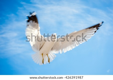 Seagull bird in flight with motion blurred wings outstretched hovering against a blue sky - stock photo