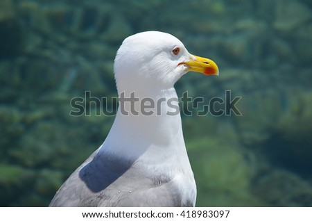 Seagull, Bird, Seagull Background, Ornithology, Seagull on Water - stock photo