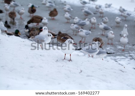 seagull by frozen lake during snowstorm in winter - stock photo