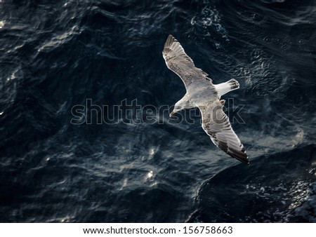Seagull flying above the water - stock photo