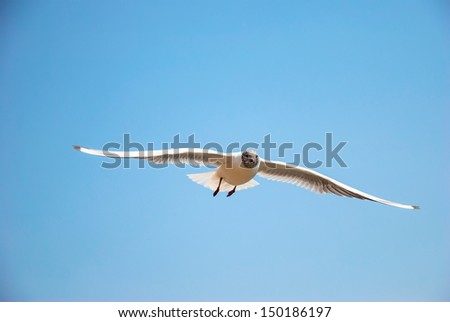 Seagull flying in blue sky. - stock photo