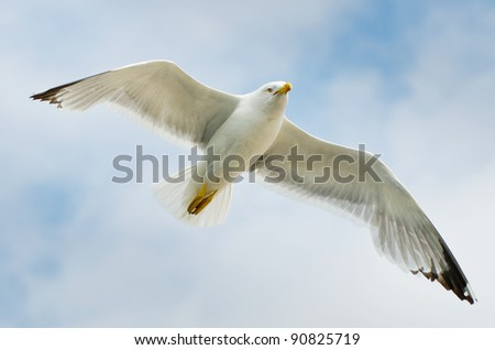 seagull flying in the sky - stock photo
