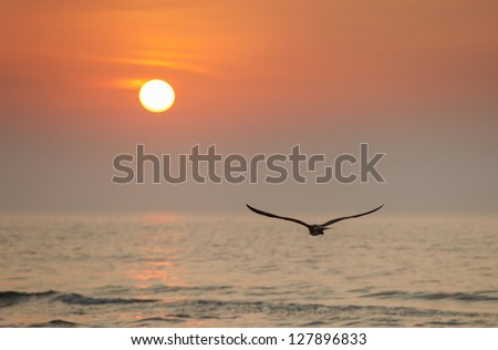 Seagull flying into the sun - stock photo