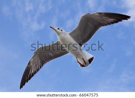 seagull flying on beautiful blue sky - stock photo