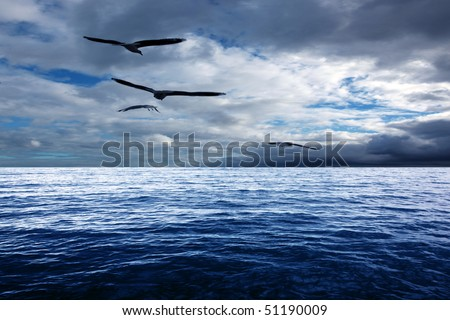 Seagull flying over ocean - stock photo