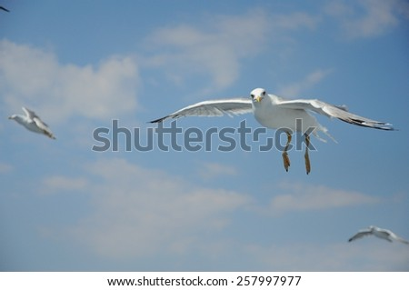 seagull flying over the ocean - stock photo