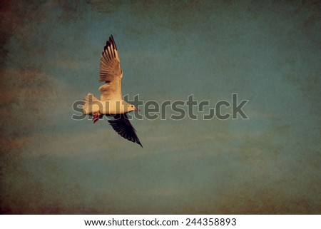Seagull flying over the sea of blue sky, vintage background - stock photo