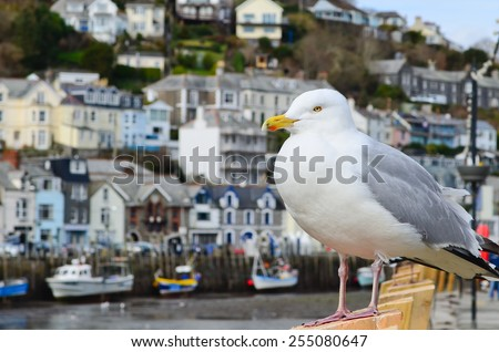 Seagull in a typically British seaside town setting, photo was taken in Looe which is in Cornwall, England. - stock photo