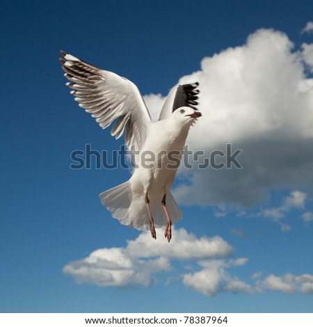 seagull in flight against a beautiful blue sky - stock photo