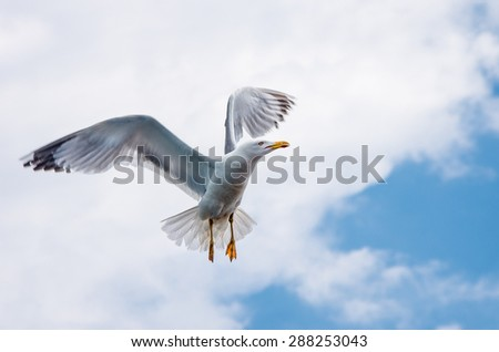 Seagull in flight in the sky - stock photo