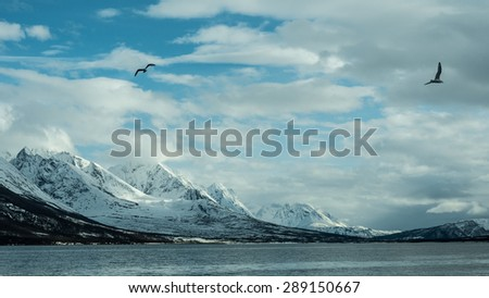 seagull in Norway - stock photo