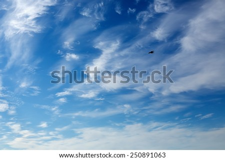 Seagull in the blue sky with beautiful white clouds. - stock photo