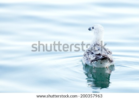 Seagull in the ocean - stock photo