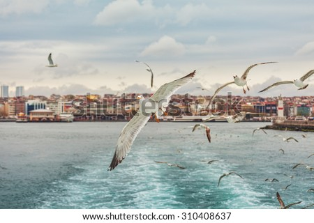 Seagull Istanbul, Bosporus, Turkey. Seagull flying over the sea , against the backdrop of the city , a photo of the ship - stock photo