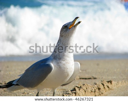 Seagull making some noise - stock photo