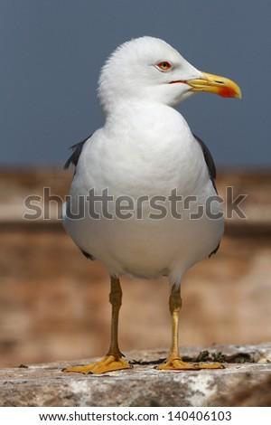 Seagull on harbor - stock photo