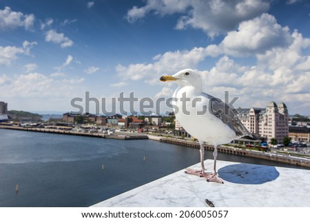 Seagull on opera house in Oslo, Norway - stock photo