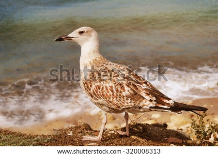 Seagull on the Background of  Tide at Sunny day - stock photo