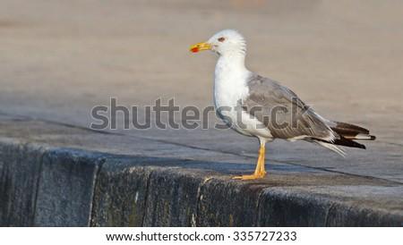 Seagull on the pier/Seagull on the pier - stock photo