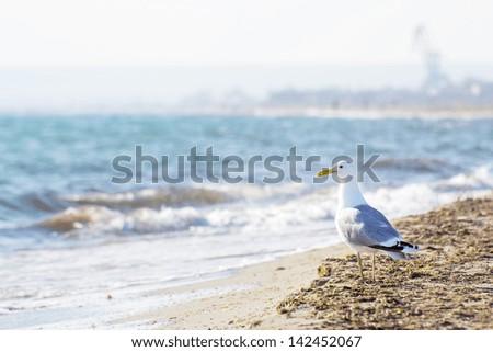 Seagull on the seashore - stock photo