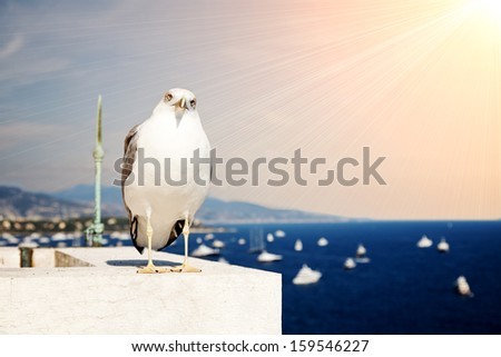 Seagull sits on roof  marina background - stock photo