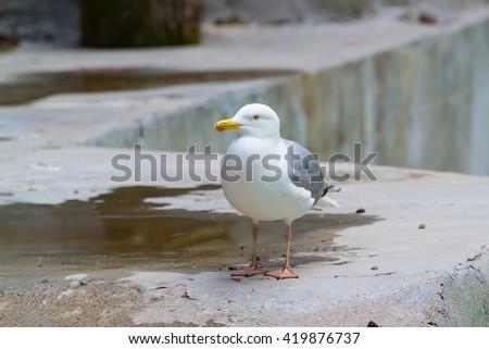 Seagull sitting on the beach - stock photo
