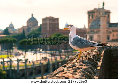 Seagull sitting on the ruins of Trajan's Market in Rome, Italy - stock photo