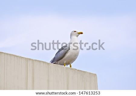 seagull sitting on top of the wall - stock photo