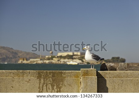 Seagull sitting on wall with Alcatraz in the background. San Francisco. - stock photo