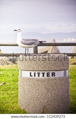 Seagull standing looking from litter bin - stock photo