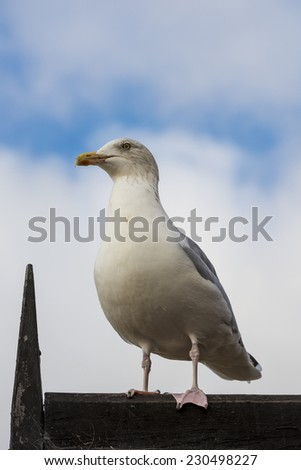 Seagull standing on a roof, shot from below against clouds with blue sky showing through - stock photo