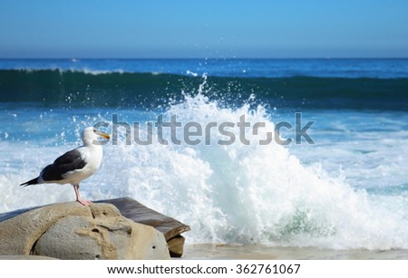 Seagull standing on rocks as wave crash at the beach - stock photo