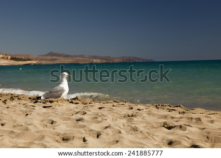 Seagull standing on sea beach with selective focus and copy space - stock photo