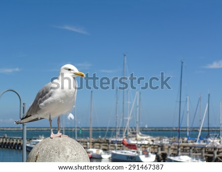 Seagull standing on the pillar in the marina in Warnemuende, Germany - stock photo