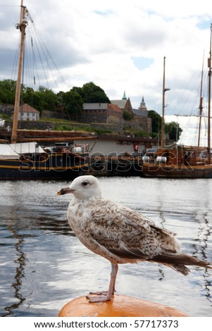 Seagull with sea and boat  as a background - stock photo