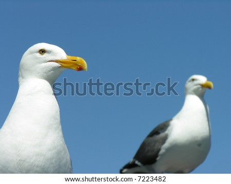 seagulls - stock photo