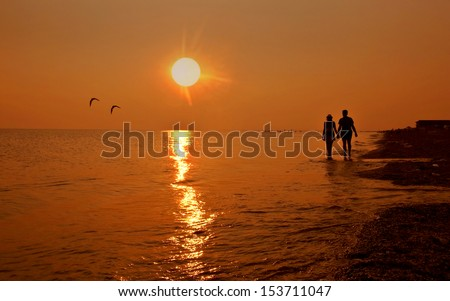 seagulls against the coming sun                                                      - stock photo