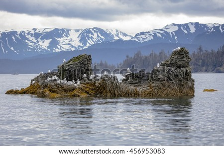 Seagulls and Kittiwake's sitting on a small rock island in the middle of Resurrection Bay, Alaska - stock photo