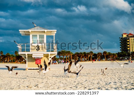Seagulls and lifeguard tower at the Clearwater Beach. Florida. - stock photo
