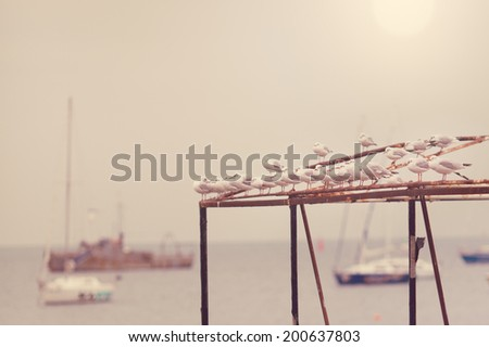 Seagulls  and sea background - stock photo