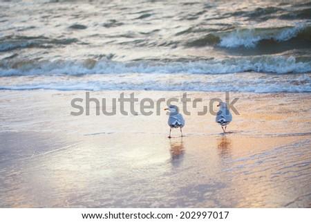 Seagulls at the coas - stock photo