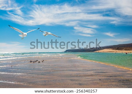 Seagulls by the shore of Costa Calma in Fuerteventura, Canary islands, Spain. Focus on seagulls. - stock photo