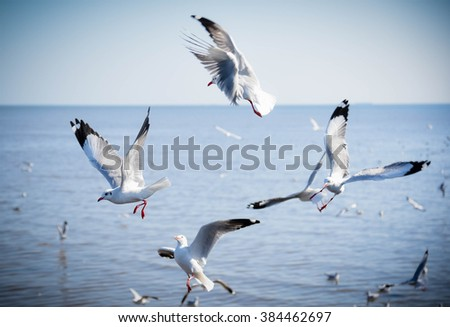 Seagulls fly top of the blue sea by use selective focus on left bird and vignette - stock photo