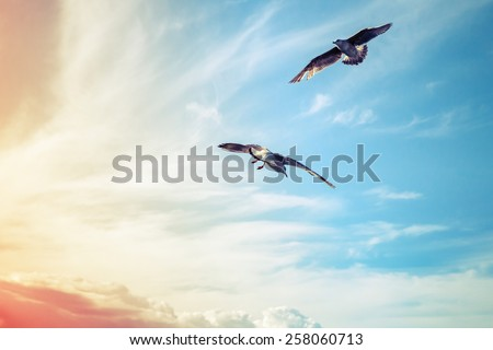 Seagulls flying on cloudy sky background, colorful tonal correction filter - stock photo